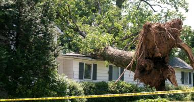 Blog post 6 Signs Your Tree Might Be About To Fall